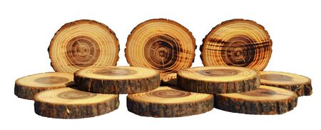 discs: Tree slices with barks Stock Photo