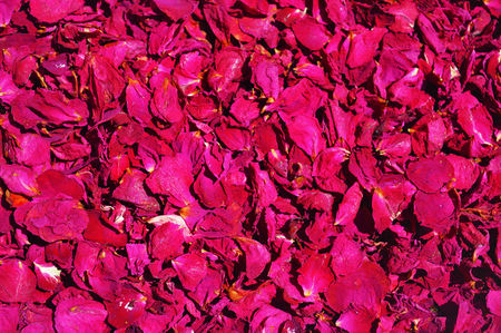 rose petals: Background from petals dried red roses