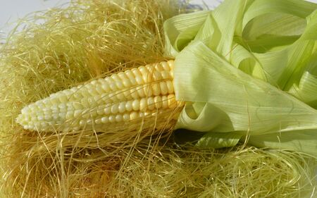 maize: Young corn with maize beard Stock Photo