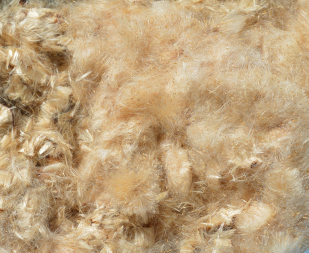 stuffing: Background from Bulrush Down Stuffing Stock Photo