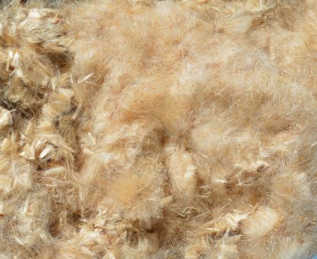 bulrush: Background from Bulrush Down Stuffing Stock Photo