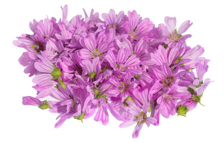 vulgaris: Pile of Malva vulgaris on a white background
