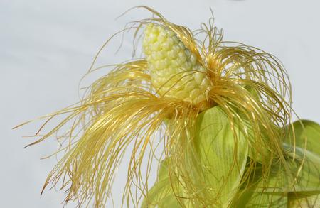 maize: Corn with maize beard Stock Photo
