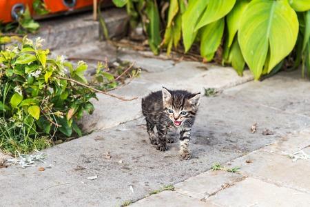 cute kittens: little cute kittens in the garden on the path