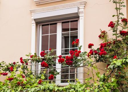 sash: Old Sash Windows with Window Box Gardens of a Old English Town House