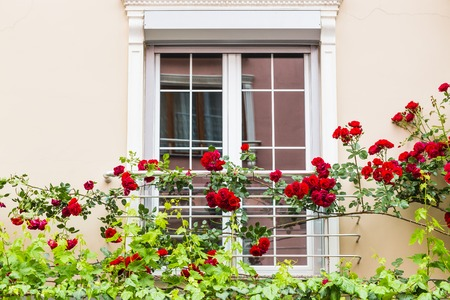 Old Sash Windows with Window Box Gardens of a Old English Town House
