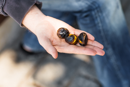 marron: Grilled chestnuts for sale in a market stall Stock Photo
