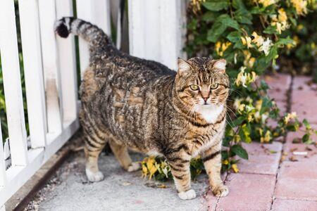 fat cat lyingfat lazy cat in the street in Turkey Reklamní fotografie - 42515351