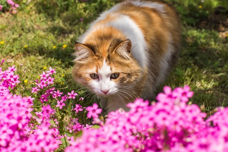 flowers cat: cute cat sitting in flowers in Istanbul Stock Photo