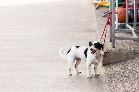 dog waiting: Cute dog waiting patiently for his master on a city street Stock Photo