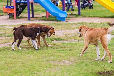 perros jugando: tres perros que juegan juntos en una calle