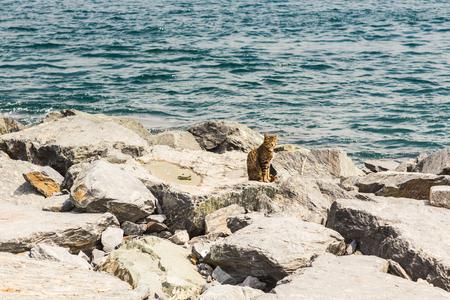 istanbul beach: Cute cat on the beach in Istanbul