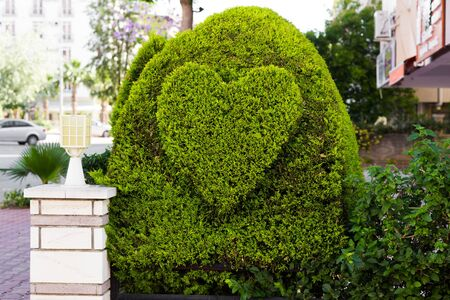 bush in the form of heart in the street Stock Photo