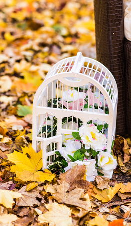 birdcage: Vintage birdcage standing on wooden bench, white candles insidewhite vintage birdcage standing on autumn leaves