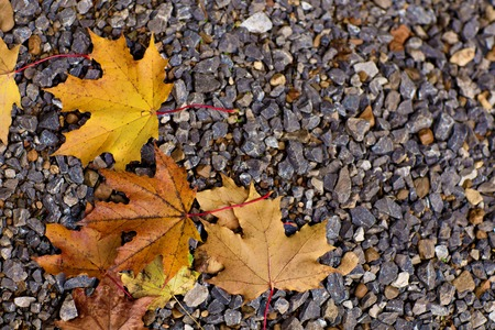 sear and yellow leaf: Colorful autumn leaves lying on the ground Stock Photo