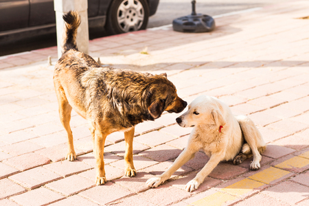 sniff dog: two friendly  homeless dogs on the road