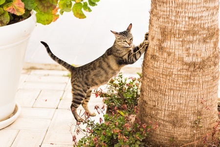 cat sharpening its claws on a tree cat scratching nails on tree