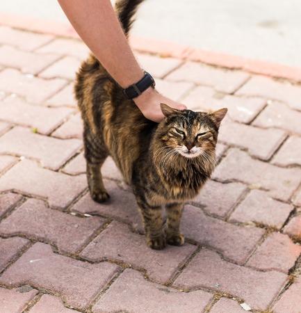 feeling good: Human hand stroking homeless cat feeling good. Stock Photo