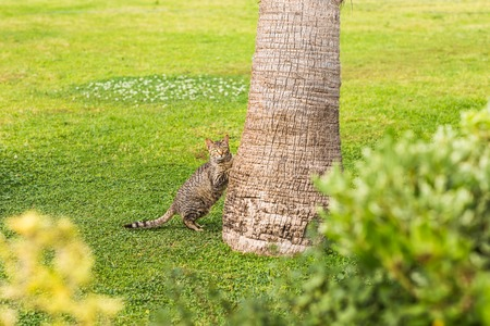trusting: Cat outdoors. Cute  cat with palm tree