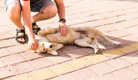 stroking: Young man stroking  playful dog - Concepts of friendship,pets,togetherness
