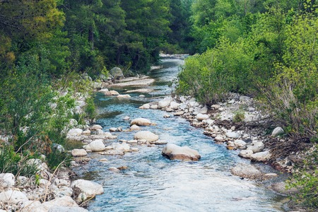 forest river: Landscape with forest, river and stones in Turkey.