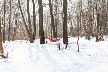 hammock: Hamaca que cuelga en el bosque de invierno en un claro d�a soleado