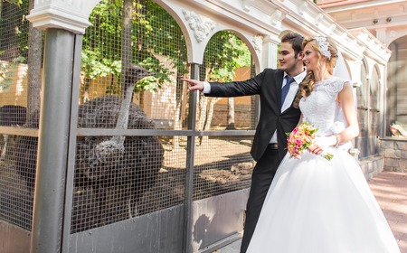 bride and groom and ostrich in zoo.