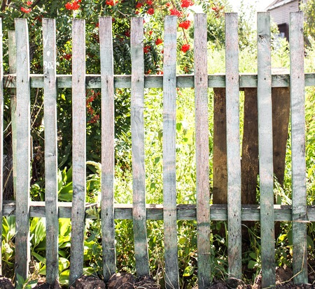 paling: old wooden fence in garden with plant. Stock Photo