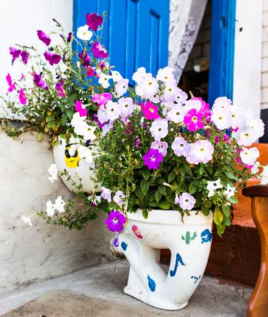 planters: unusual planters. Toilets used to raise alpine plants.