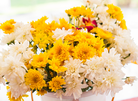 flori culture: White and yellow colored chrysanthemums in a vase.