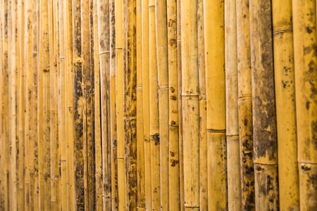 backgroung: bamboo texture pattern backgroung. wood texture backgroung