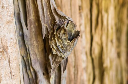 backgroung: Bark of tree. Tree texture pattern backgroung. wood texture backgroung Stock Photo