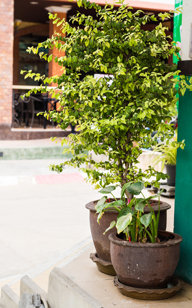 plant pots: Green potted plants. Herbs in plant pots growing