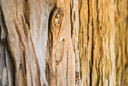 crack willow: Bark of tree. Tree texture pattern backgroung. wood texture backgroung Stock Photo