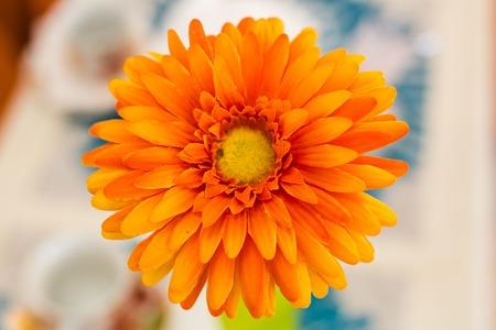 herbera: Orange gerbera flower. Closeup, Flower in vase Stock Photo