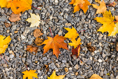 Fall leaves background. original autumn foliage in different colors on wooden floor Stock Photo