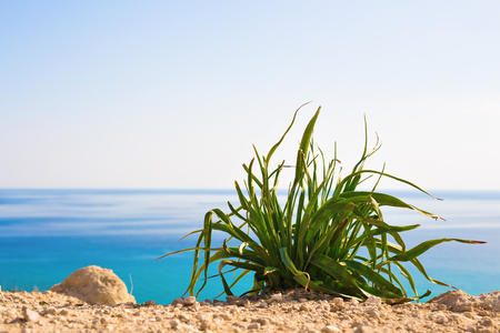 Green plant against bright blue sea as a natural spring or summer background.