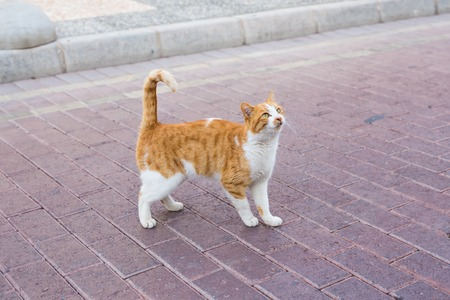 Concept of homeless animals - Stray dirty sadness cat on the street Stock Photo