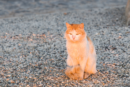 Concept of homeless animals - Stray cat on the street Stock Photo