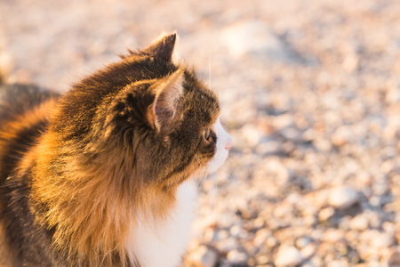 Concept of homeless animals - Stray cute cat on the street Stock Photo