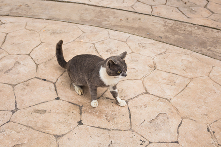 grey cat: Concept of homeless animals - Stray cat on the street Stock Photo