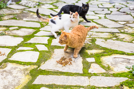 grey cat: Street cats eating food - Concept of homeless animals Stock Photo
