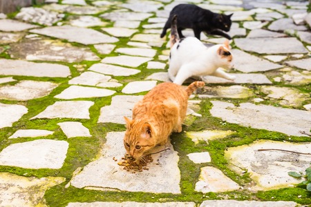Street cats eating food - Concept of homeless animals Stock Photo