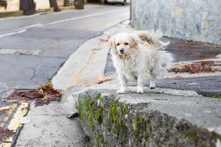 soltería: Portrait of a Sad Homeless Dog Foto de archivo