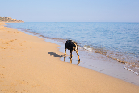 Dog walking on the beach Stock Photo