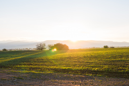 green rural field at the early morning Stock Photo