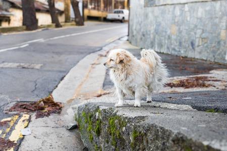 soltería: Retrato de un perro sin hogar triste