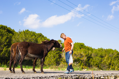 Young man playing and feed wild donkeys, Cyprus, Karpaz National Park Wild Donkey Protection Area. Stock Photo