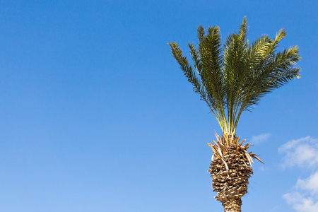 Palm tree on background in the sky Stock Photo