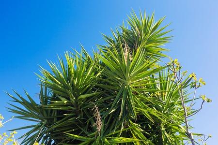 Palmiers sur fond dans le ciel Banque d'images